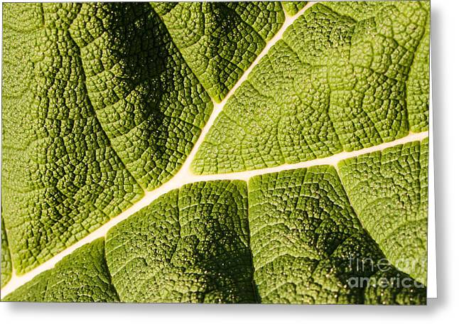 Greeting Card featuring the photograph Veins Of A Leaf by John Wadleigh