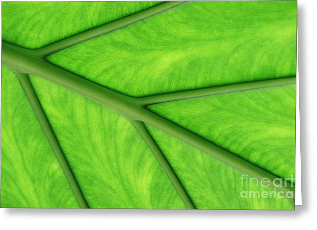 Greeting Card featuring the photograph Veins Of Life by Judy Whitton