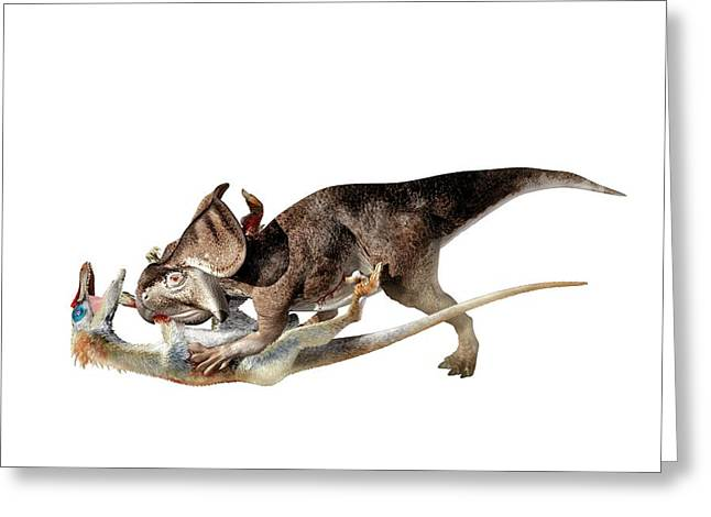 Velociraptor Attacking Protoceratops Greeting Card by Jose Antonio Pe�as