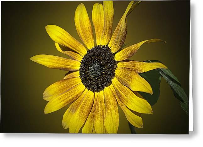 Velvet Queen Sunflower Greeting Card