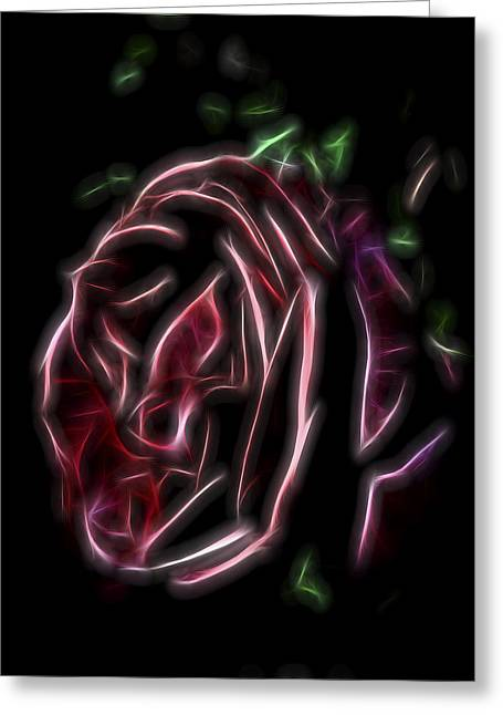 Velvet Rose 1 Greeting Card by William Horden