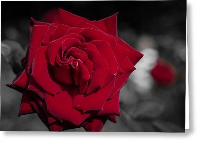 Velvet Rose 2 Greeting Card