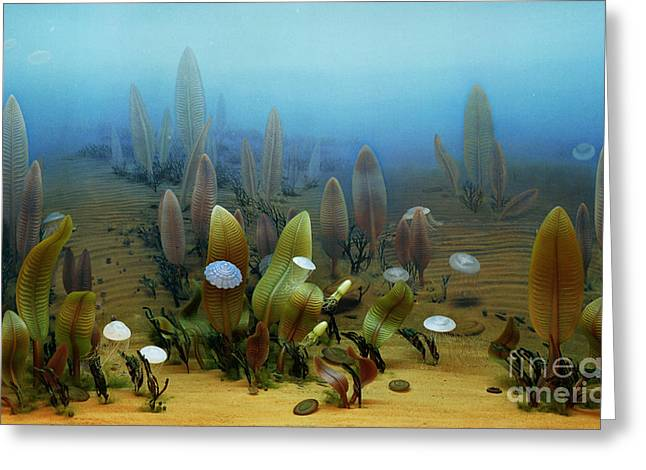 Vendian Marine Life Greeting Card by Chase Studio