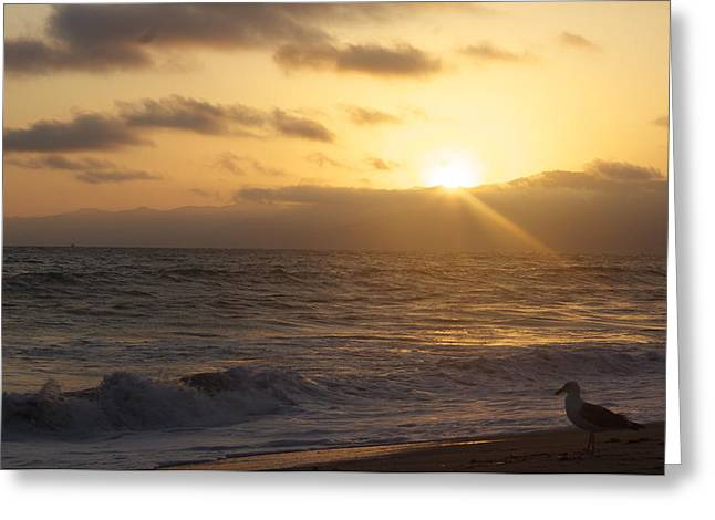 Venice Beach Sunset Greeting Card by Rollie Robles