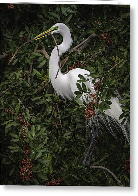Venice Rookery Egret Greeting Card