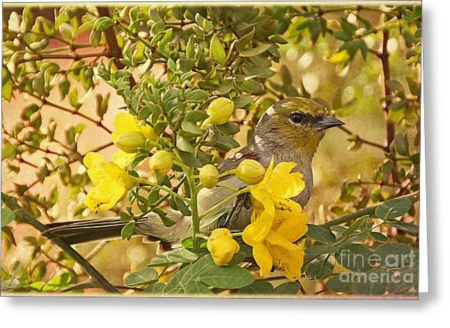 Verdin Greeting Card by Elizabeth Winter