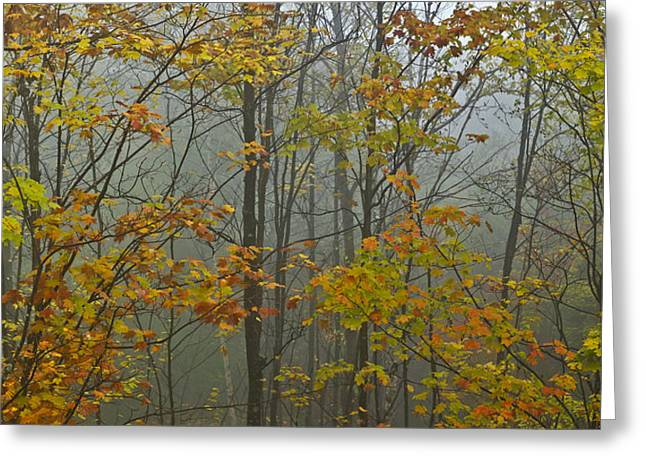 Vermont Autumn Trees Fog Mount Mansfield Panorama Greeting Card by Andy Gimino