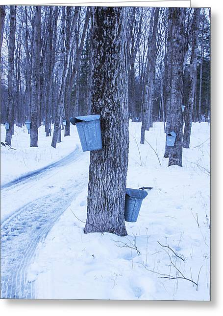 Vermont Maple Syrup Buckets Greeting Card