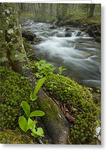 Vermont Waterfall Forest River Brook Greeting Card