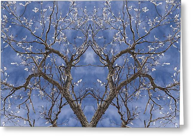 Vermont Winter Mirror Trees Snow Sky Greeting Card by Andy Gimino