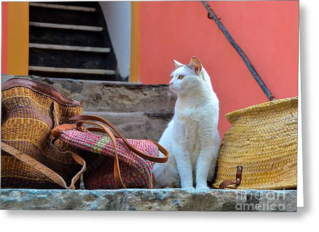 Vernazza Shop Cat Greeting Card by Amy Fearn