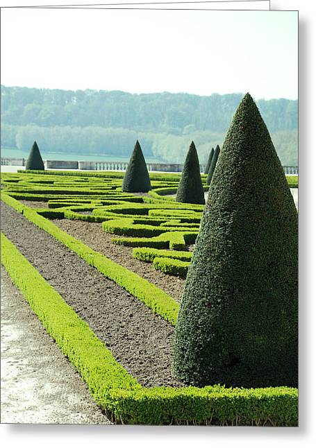 Versailles Topiary Garden Greeting Card by Jennifer Ancker