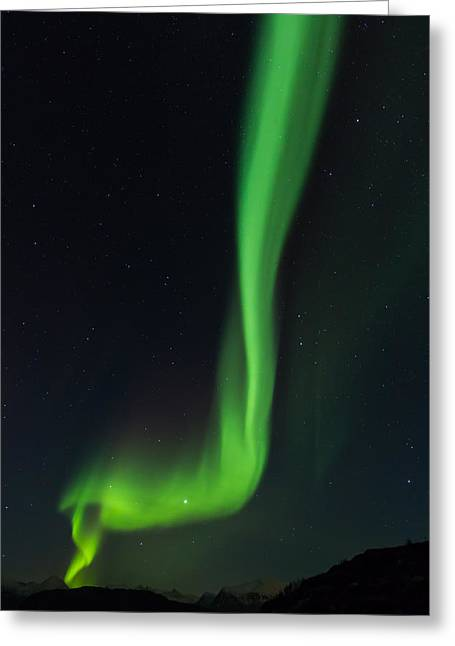 Vertical Ray Of Northern Lights In Norway Greeting Card by Aldona Pivoriene