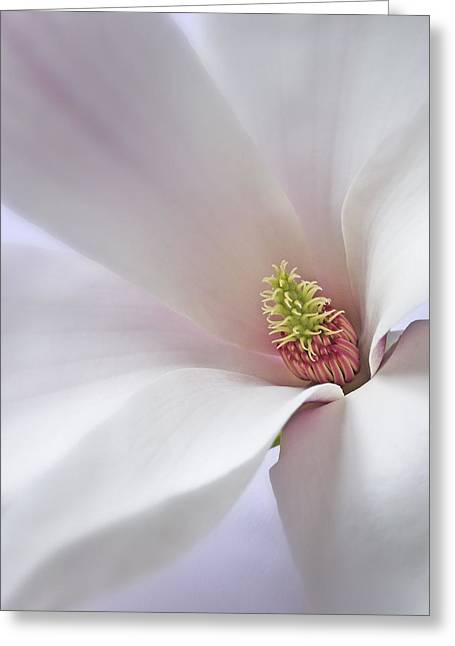 Vertical White Flower Magnolia Spring Blossom Floral Fine Art Photograph Greeting Card by Artecco Fine Art Photography