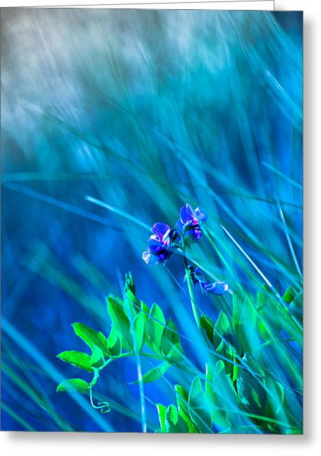 Vetch In Blue Greeting Card by Adria Trail