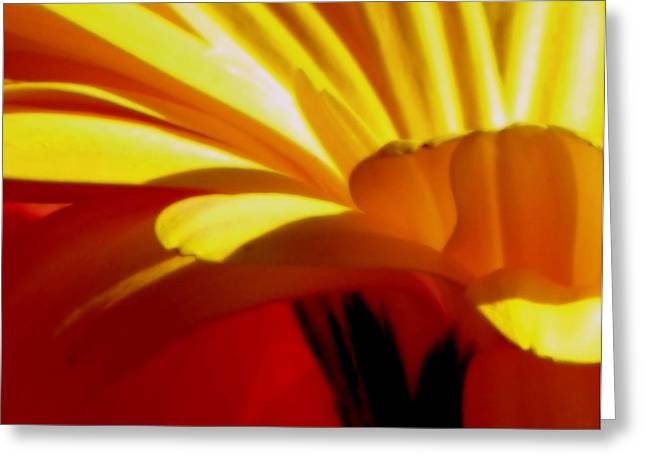 Vibrance  Greeting Card by Karen Wiles
