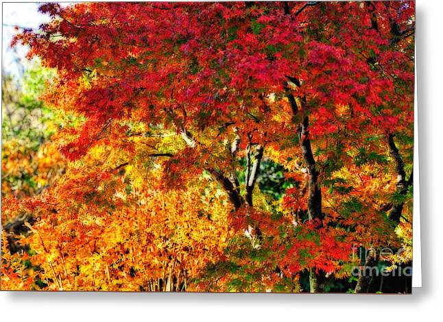 Vibrance Of Autumn Greeting Card