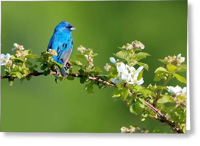 Vibrance Of Spring Greeting Card