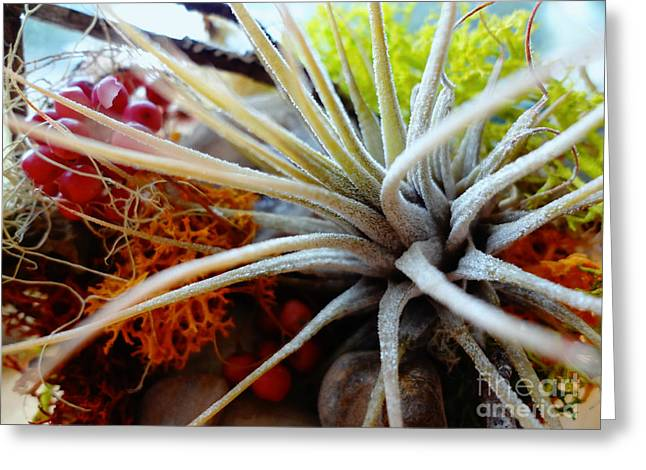 Greeting Card featuring the photograph Vibrant by Arlene Sundby