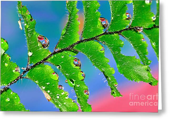 Vibrant Maiden Greeting Card by Kaye Menner