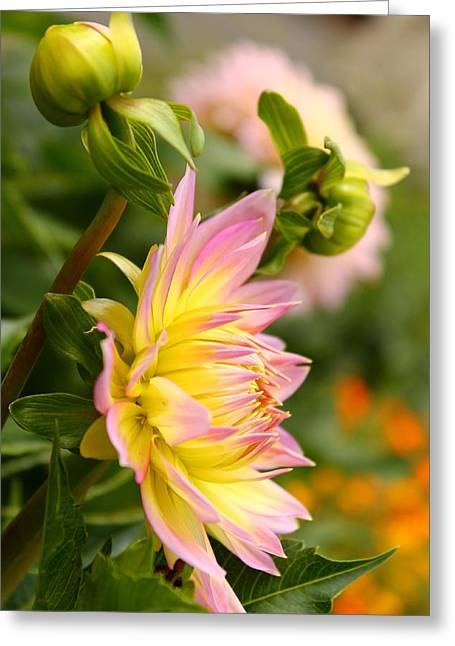 Vibrant Mum Greeting Card