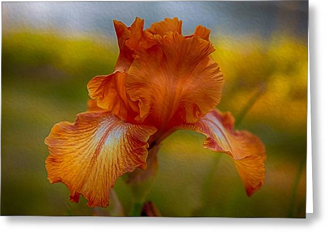 Vibrant Orange Iris Greeting Card by Omaste Witkowski