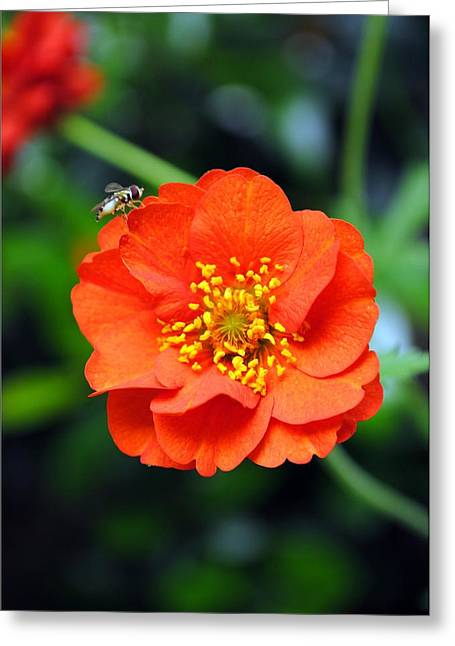 Greeting Card featuring the photograph Vibrant Pop Of Orange by Kelly Nowak