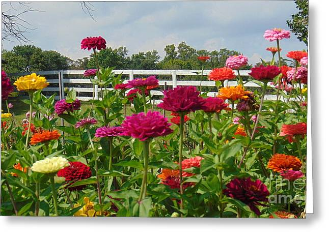 Vibrant Zinnia Garden Greeting Card
