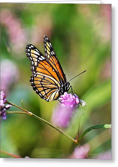 Viceroy Butterfly Greeting Card by Christina Rollo