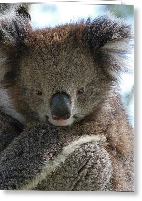 Victorian Koala Greeting Card by Margaret Saheed