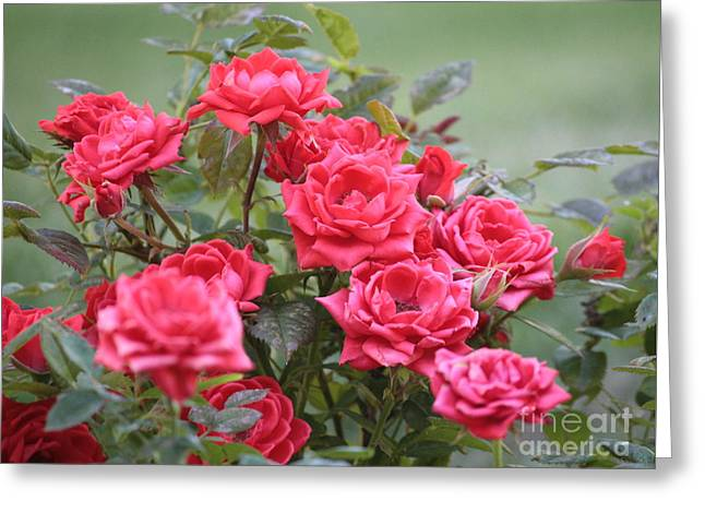 Victorian Rose Garden Greeting Card by Carol Groenen