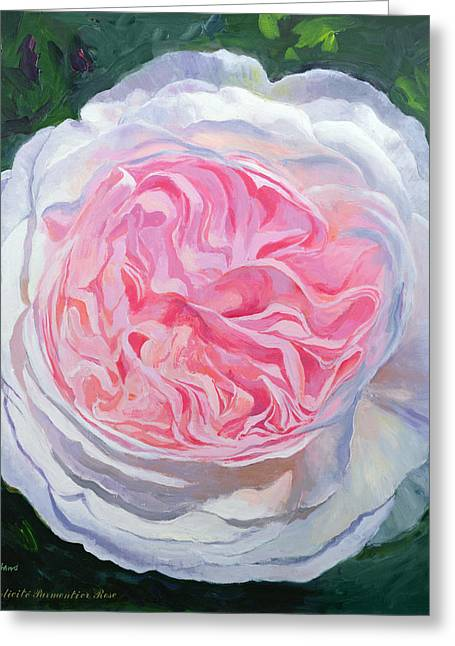 Victorian Rose Oil On Board Greeting Card by William Ireland
