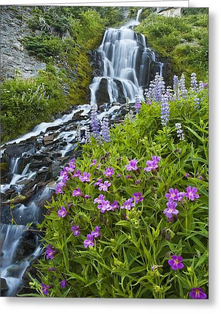 Vidae Falls And Flowers Greeting Card