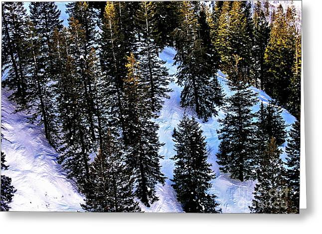 View Of Evergreens At Beaver Creek Colorado Greeting Card