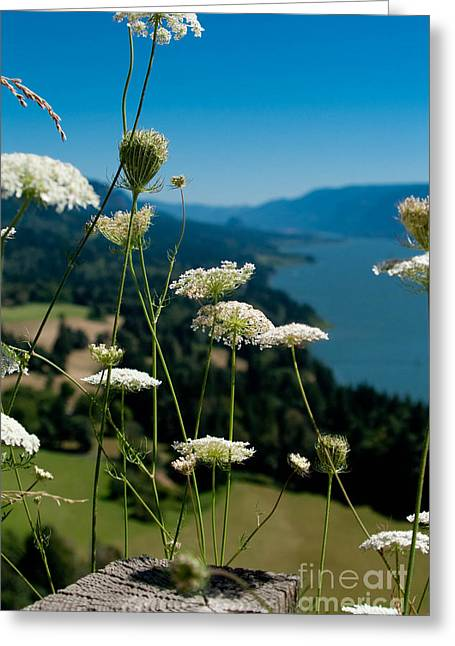 View From Cape Horn Greeting Card by Cari Gesch