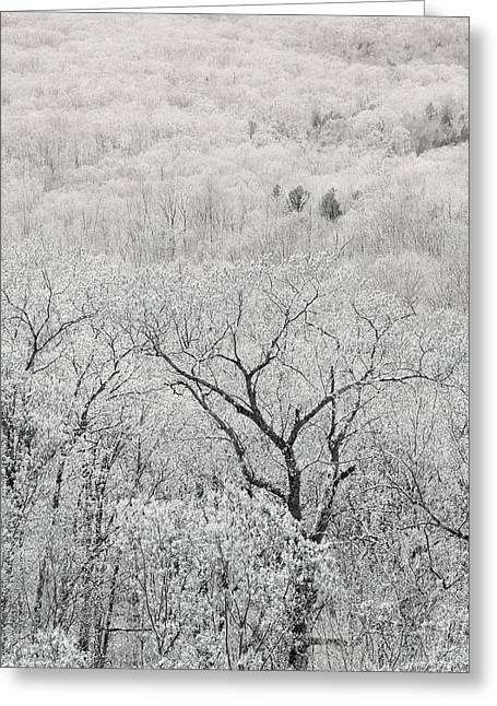 View From Taum Sauk Mountain In Missouri Greeting Card by Greg Matchick
