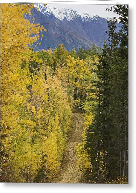View Of Chugach Mountains From The Greeting Card by Michael Criss