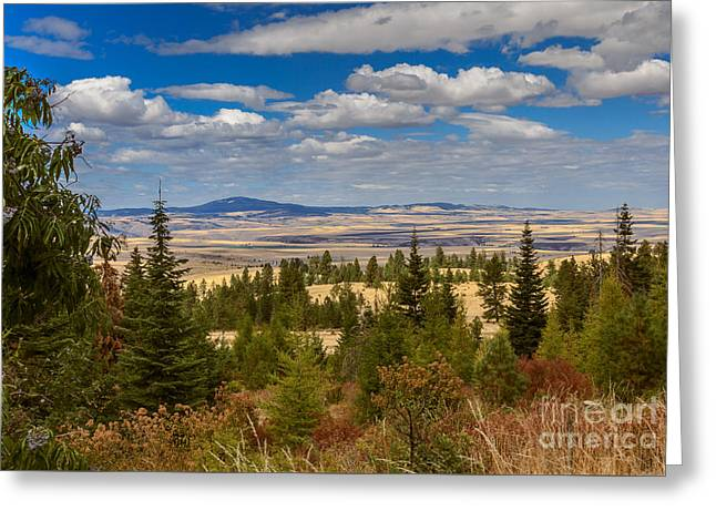 View Of Cottonwood Butte Greeting Card