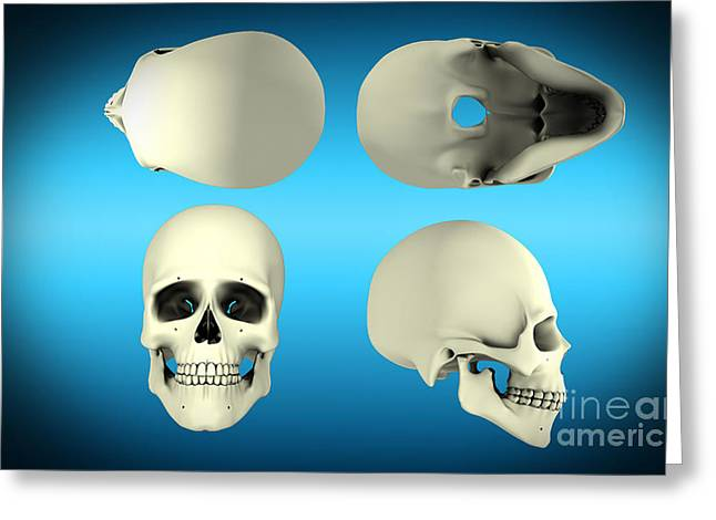 View Of Human Skull From Different Greeting Card by Stocktrek Images