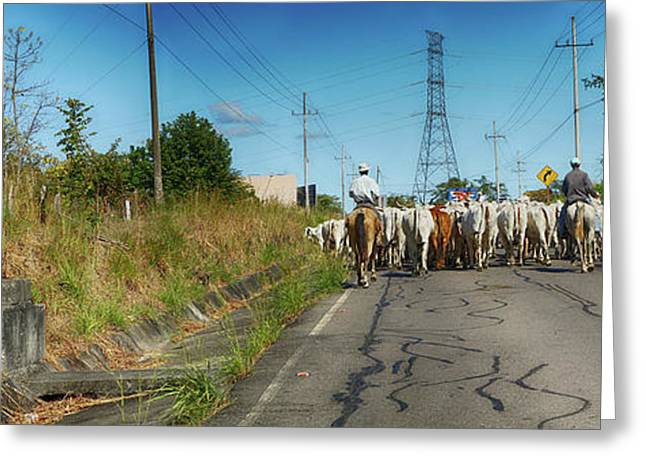 View Of Men With Horses On Road Greeting Card by Panoramic Images