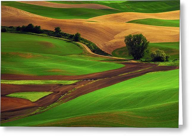 View Of Palouse Cultivation Patterns Greeting Card by Michel Hersen