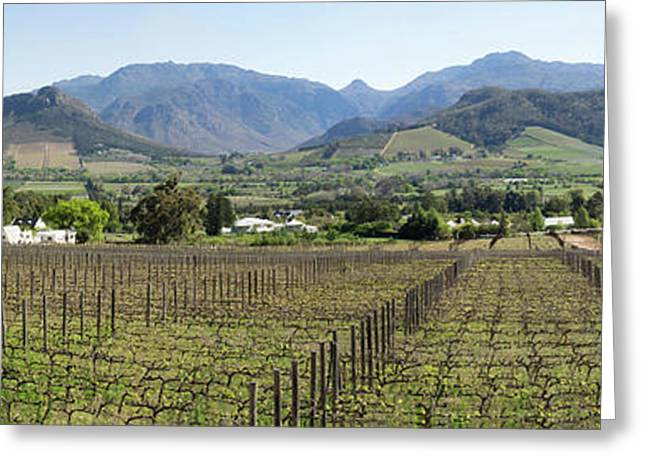 View Of Vineyard In Franschhoek, Cape Greeting Card by Panoramic Images