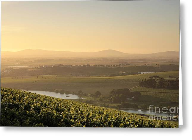 View Over Vines Greeting Card