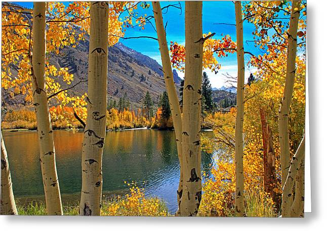 View Through The Aspens Greeting Card by Donna Kennedy