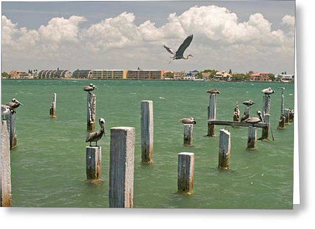 View Toward Cabbage Key From St Greeting Card