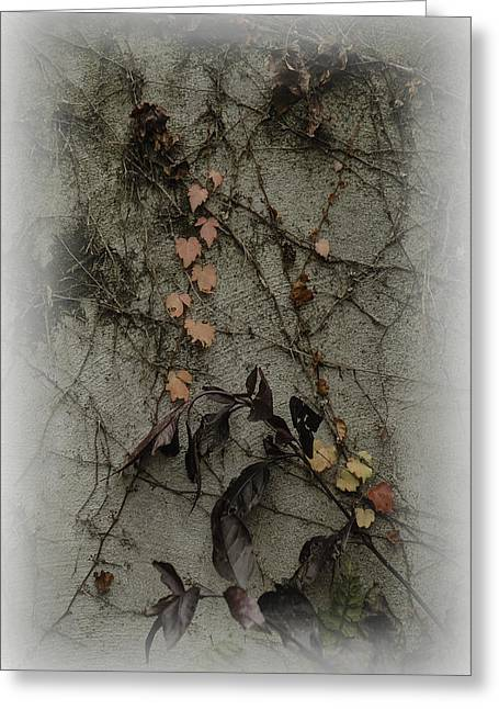 Vignes D'automne Greeting Card