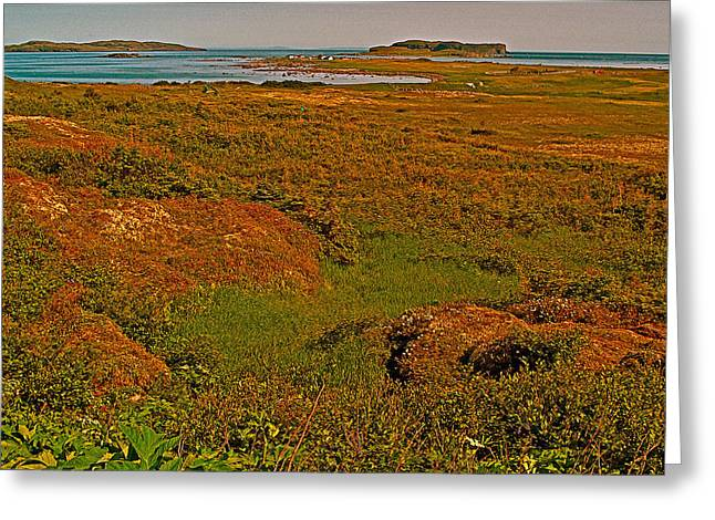 Viking Landing Point At L'anse Aux Meadows-nl Greeting Card
