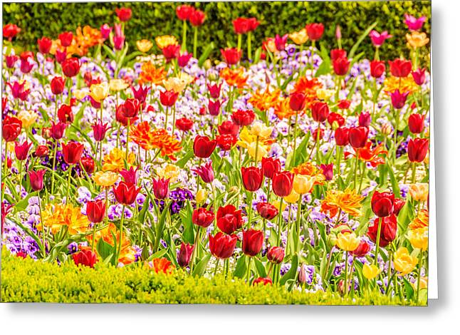 Vincent Van Gogh Style Flowerbed With Tulips And Violas Greeting Card by Colin Utz