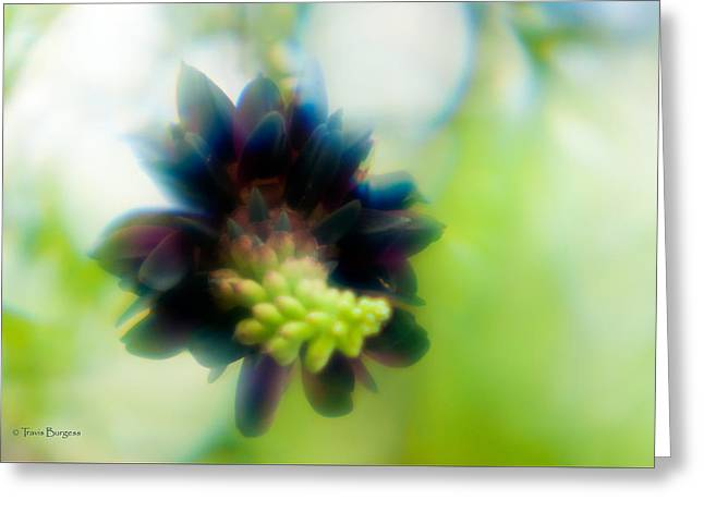 Greeting Card featuring the photograph Vine 1 by Travis Burgess
