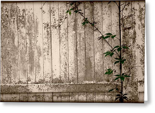 Greeting Card featuring the photograph Vine And Fence by Amanda Vouglas
